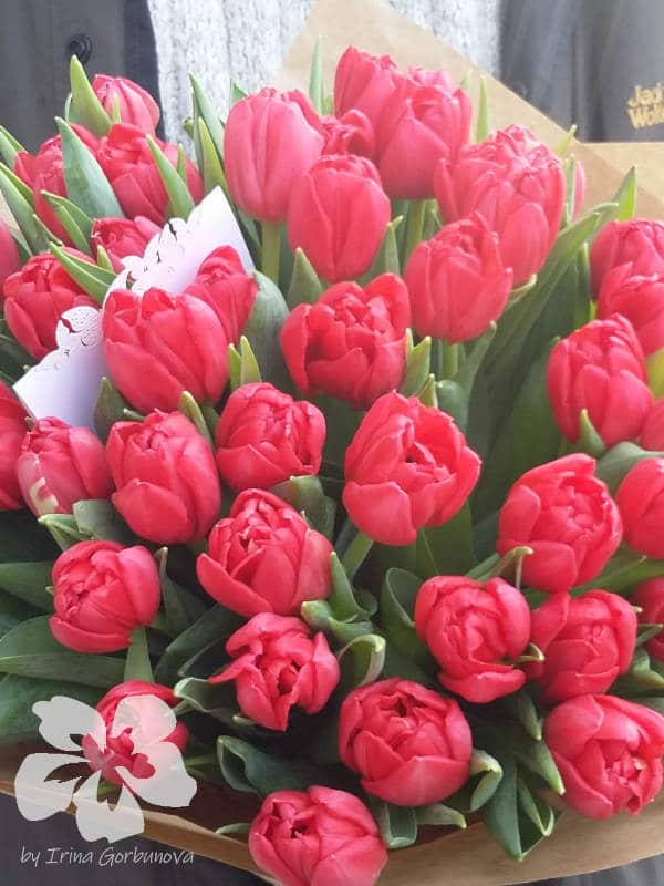 тюльпаны фото цветов букеты