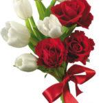 нарисованные букеты тюльпанов